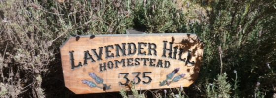 Welcome to Lavenderhill homestead
