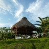 Le jardin de Palenque, au coeur des plantes spirituelles
